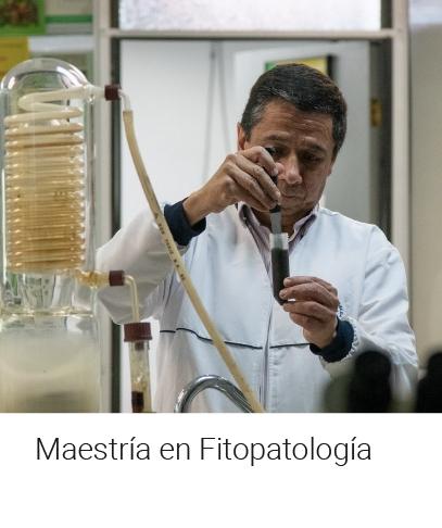 Maestría en Fitopatología